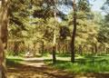 Сормовский парк сосновый бор